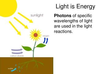 Light is Energy