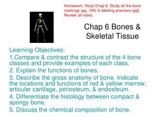 Chap 6 Bones & Skeletal Tissue