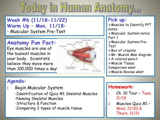 Week #6 (11/18-11/22) Warm Up – Mon, 11/18: - Muscular System Pre-Test