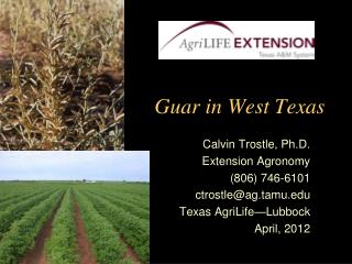 Guar in West Texas