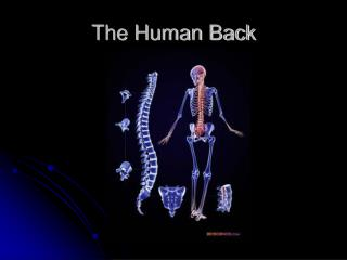 The Human Back
