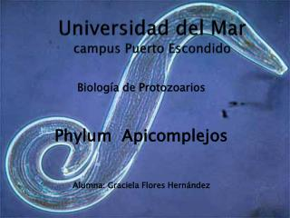 Universidad del Mar campus Puerto Escondido