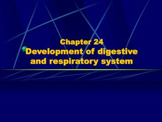 Chapter 24 Development of digestive  and respiratory system