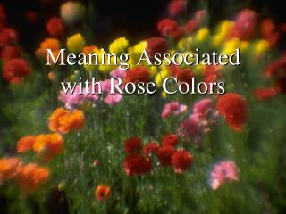 Meaning Associated with Rose Colors