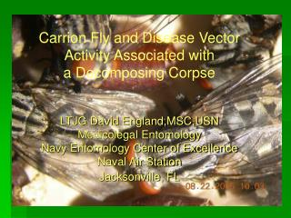 Carrion Fly and Disease Vector Activity Associated with   a Decomposing Corpse