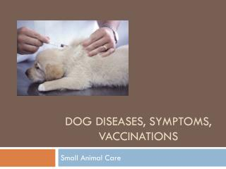 Dog Diseases, Symptoms, Vaccinations