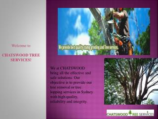 Best Tree removal services Sydney