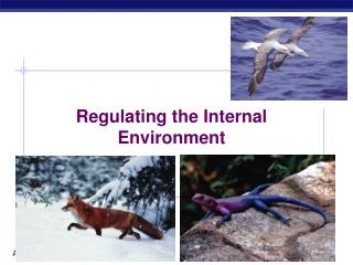 Regulating the Internal Environment