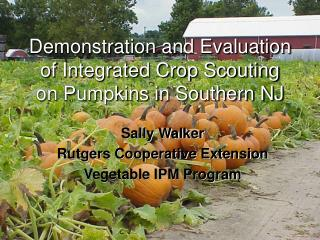 Demonstration and Evaluation of Integrated Crop Scouting on Pumpkins in Southern NJ