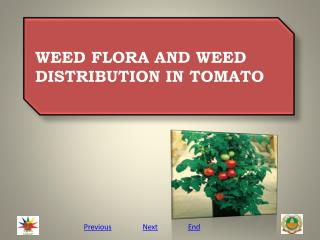WEED FLORA AND WEED DISTRIBUTION IN TOMATO
