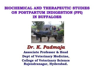 BIOCHEMICAL AND THERAPEUTIC STUDIES ON POSTPARTUM INDIGESTION (PPI)  IN BUFFALOES