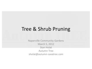 Tree & Shrub Pruning