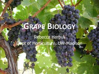 Grape Biology