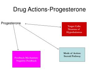 Drug Actions-Progesterone