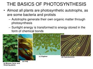 Almost all plants are photosynthetic autotrophs, as are some bacteria and protists