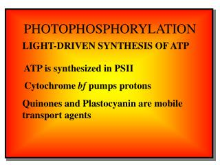 PHOTOPHOSPHORYLATION