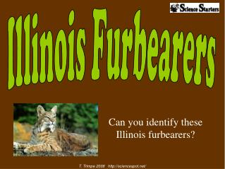 Can you identify these Illinois furbearers?