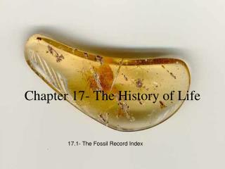 Chapter 17- The History of Life