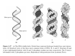 wiley/college/pratt/0471393878/student/animations/dna_replication/index.html