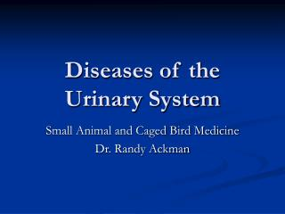 Diseases of the Urinary System