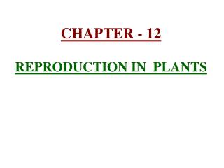 CHAPTER - 12  REPRODUCTION IN  PLANTS