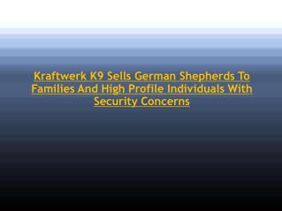 Kraftwerk K9 Sells German Shepherds To Families And High Pro