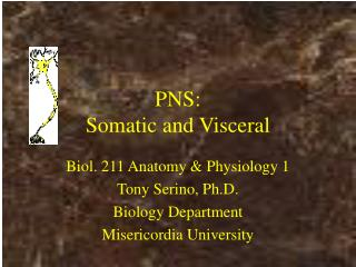 PNS: Somatic and Visceral
