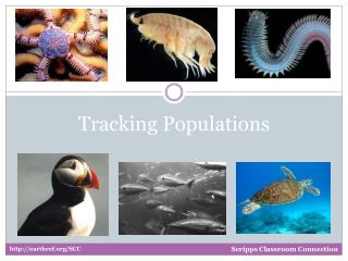Tracking Populations