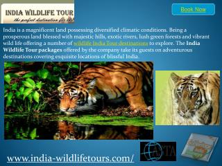 india wildlife tour