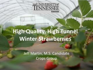 High Quality, High Tunnel Winter Strawberries