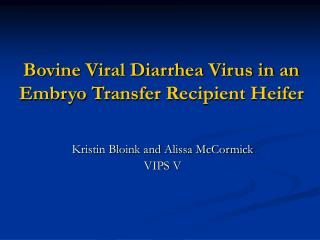 Bovine Viral Diarrhea Virus in an Embryo Transfer Recipient Heifer
