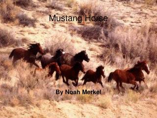Mustang Horse