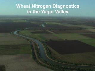 Wheat Nitrogen Diagnostics in the Yaqui Valley