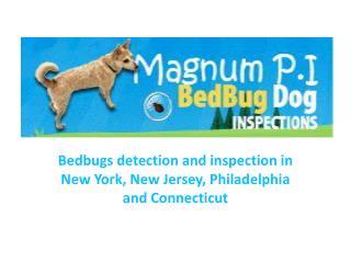 Bedbugs inspection in New York, New Jersey, Philadelphia