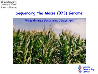 Sequencing the Maize B73 Genome