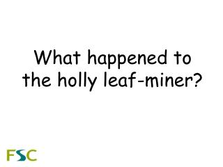 What happened to the holly leaf-miner?