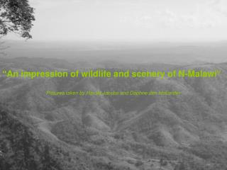 """An impression of wildlife and scenery of N-Malawi"""
