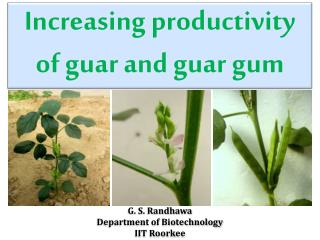 Increasing productivity of guar and guar gum
