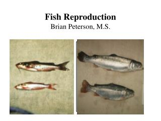 Fish Reproduction Brian Peterson, M.S.