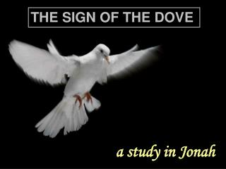 THE SIGN OF THE DOVE