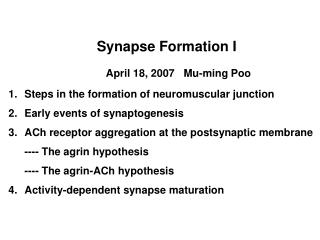 Synapse Formation I April 18, 2007   Mu-ming Poo Steps in the formation of neuromuscular junction