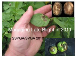 Managing Late Blight in 2011