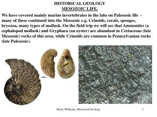 HISTORICAL GEOLOGY MESOZOIC LIFE.
