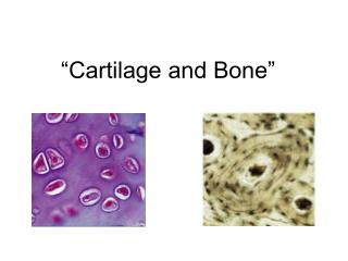 """""""Cartilage and Bone"""""""