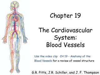 Use the video clip:  CH 19 - Anatomy of the  Blood Vessels  for a review of vessel structure