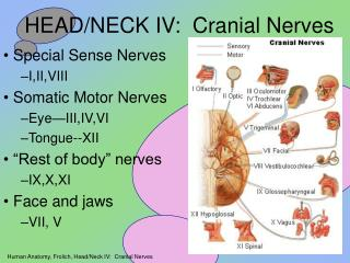 HEAD/NECK IV:  Cranial Nerves