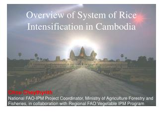 Overview of System of Rice  Intensification in Cambodia Chou Cheythyrith