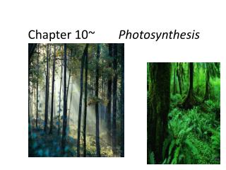 Chapter 10~		 Photosynthesis