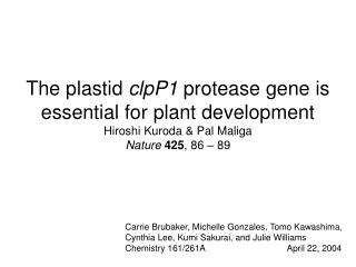 The plastid  clpP1  protease gene is essential for plant development Hiroshi Kuroda & Pal Maliga