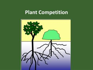 Plant Competition
